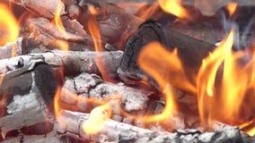 Carboni di decomposizione per la cottura e una priorità bassa video d archivio