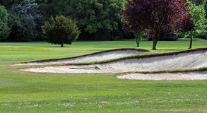 Carbonile di golf Fotografia Stock Libera da Diritti