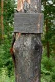 Carbonisé connectez-vous un arbre images stock
