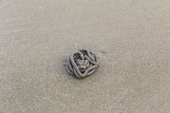 carcaça do Talão-sem-fim na areia Imagens de Stock Royalty Free