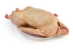 Carcaça estripada cru do ganso doméstico no fundo branco fotos de stock royalty free