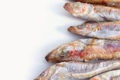 carcaça Fresco-congelada dos peixes de mar fotos de stock royalty free