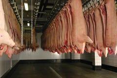 Carcaças de carne de porco Imagens de Stock