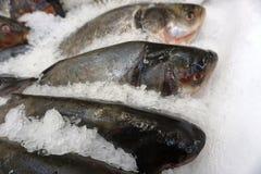 Carcaças de salmões dos peixes frescos na migalha do gelo fotografia de stock royalty free