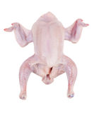 Carcass chicken wings Royalty Free Stock Image