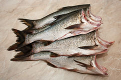 Carcass silver carp Royalty Free Stock Images
