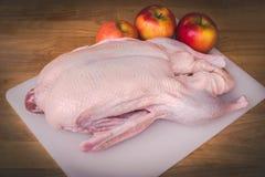 Carcassa cruda dell'anatra per arrostire Intera anatra cruda pronta da cucinare Fotografia Stock
