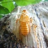 Carcassa dell'insetto fotografie stock libere da diritti