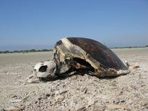 Carcasse de tortue Photo libre de droits