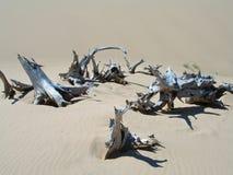 Carcasse dell'albero nell'ambiente arido asciutto Fotografia Stock