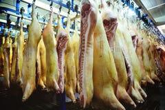 Carcasse della carne di maiale nel frigorifero Fotografie Stock