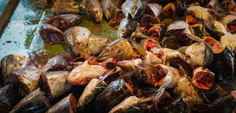 Carcasses of cat fish head at ground floor of traditional market photo taken in Jakarta Indonesia Royalty Free Stock Images