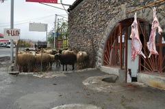 Carcasses d'agneau près du boucher en Arménie Image stock