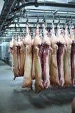 Carcasses de porc sur des crochets Images libres de droits