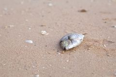 Carcasses of dead fish Stock Image