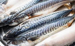 Carcasses fresh sea fish - a mackerel Royalty Free Stock Photos