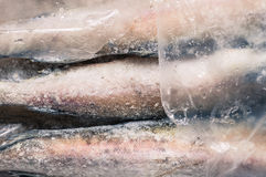 Carcasses frozen fish pollock. In the plastic packaging royalty free stock photos