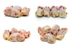 Carcasses of quails isolated on white background. Horizontal photo Royalty Free Stock Images