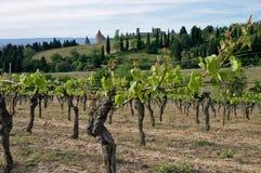Carcassona e il wineyard Immagine Stock