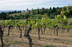 Carcassonne en wineyard Stock Afbeelding