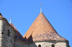 Carcassonnee, La cita. Gli uccelli Fotografie Stock Libere da Diritti