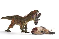 Carcharodontosaurus biting a dinosaur body with blood on white. Background stock photos