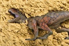 Carcharodontosaurus on sand. Concept of animal excavating Stock Image