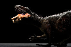 Carcharodontosaurus toy catches a smaller dinosaur Royalty Free Stock Photos