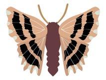 carcharodus бабочки alceae Стоковая Фотография