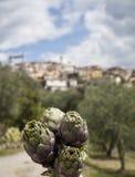 Carciofi in Italia Fotografia Stock