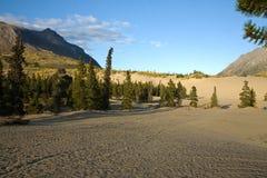 Carcross öken, den mest nordliga och minsta öknen i Kanada arkivfoton