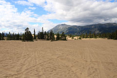 Έρημος Carcross, Carcross, Yukon, Καναδάς Στοκ Εικόνες