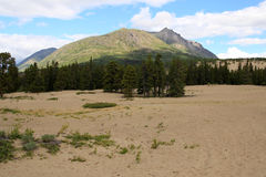 Carcross Desert, Carcross, Yukon, Canada Royalty Free Stock Images