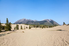Carcross Desert Royalty Free Stock Photography