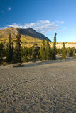 Carcross Desert, a microclimate, in Canada Yukon Stock Image