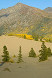 Carcross Desert, the most northern and smallest desert in Canada Stock Photography