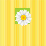 Card. With a camomile flower. Vector illustration Stock Images