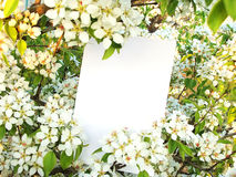 Card Against Flowers Of A Wild Pear Stock Photo