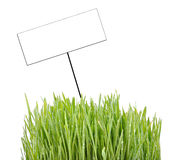 Card And Grass