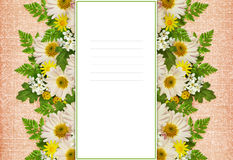Card with asters and wild flowers Royalty Free Stock Image