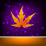 Card with autumn maple leaf template. EPS 8 Royalty Free Stock Photo