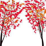 Card with autumn maple tree. Red maples. Japanese red maple. Stock Photos