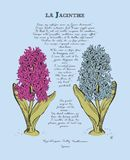 Card with beautiful flowers and poem by Sully. Hyacinth flower, springtime, spring Stock Images