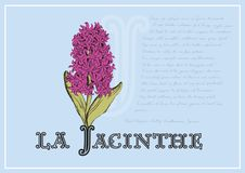 Card with beautiful hyacinth and poem. Beautiful romantic card with hyacinth rose and poem at background blue, poem of springtime Royalty Free Stock Images