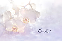 Card with beautiful white-pink orchid Stock Photography