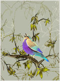 Card with a bird on a tree branch. Illustration of birds.Beautiful bird Stock Images