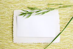 Card with blade of grass Stock Photos