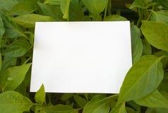Card blank Royalty Free Stock Photo