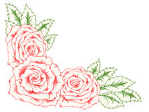 Card with blossoming roses. Royalty Free Stock Images
