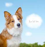Card with border collie Royalty Free Stock Photos